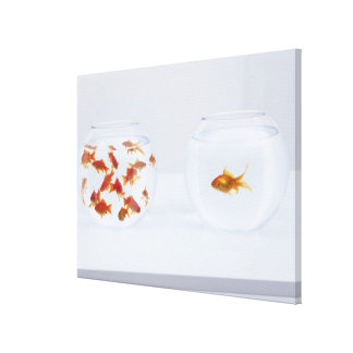 Contrast of  many goldfish in fishbowl and stretched canvas print