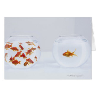 Contrast of  many goldfish in fishbowl and greeting cards