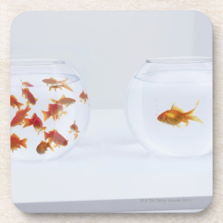 Contrast of  many goldfish in fishbowl and coaster