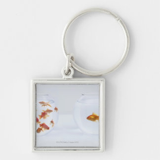 Contrast of  many goldfish in fishbowl and keychain