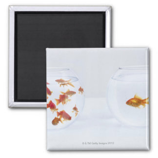 Contrast of  many goldfish in fishbowl and fridge magnet