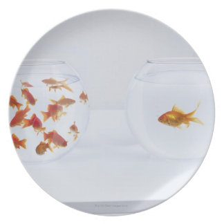 Contrast of  many goldfish in fishbowl and melamine plate