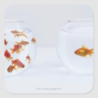 Contrast of  many goldfish in fishbowl and square sticker