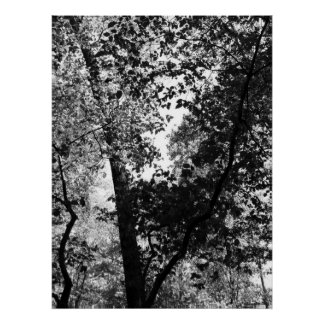 Contrast Trees poster