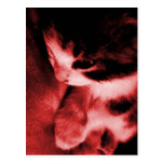 Contraste del gatito - rojo tarjeta postal