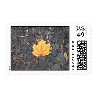 Contrasting Leaf-stamps Postage Stamp