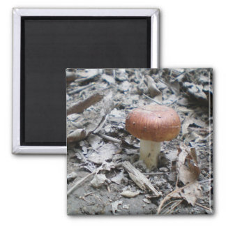 Contrasting Little Mushroom 2 Inch Square Magnet