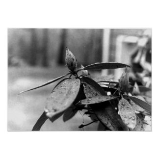 Contrqasting Flower in Black and White Poster