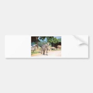 Convenio de la cebra pegatina de parachoque