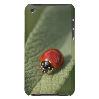 Convergent ladybird beetle on Cleveland sage Barely There iPod Case