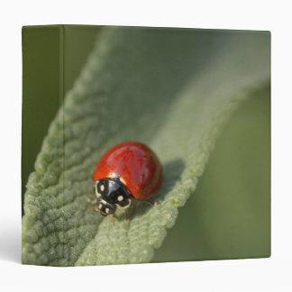 Convergent ladybird beetle on Cleveland sage 3 Ring Binder