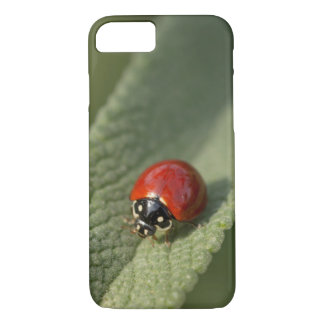 Convergent ladybird beetle on Cleveland sage iPhone 7 Case