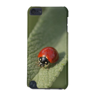Convergent ladybird beetle on Cleveland sage iPod Touch (5th Generation) Case