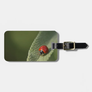 Convergent ladybird beetle on Cleveland sage Luggage Tag
