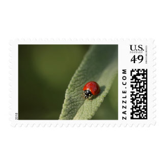 Convergent ladybird beetle on Cleveland sage Postage