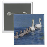 Convoy of Swans 2 Inch Square Button