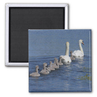 Convoy of Swans 2 Inch Square Magnet