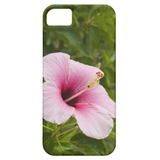 Cook Islands, Atiu. Hibiscus flower. iPhone SE/5/5s Case
