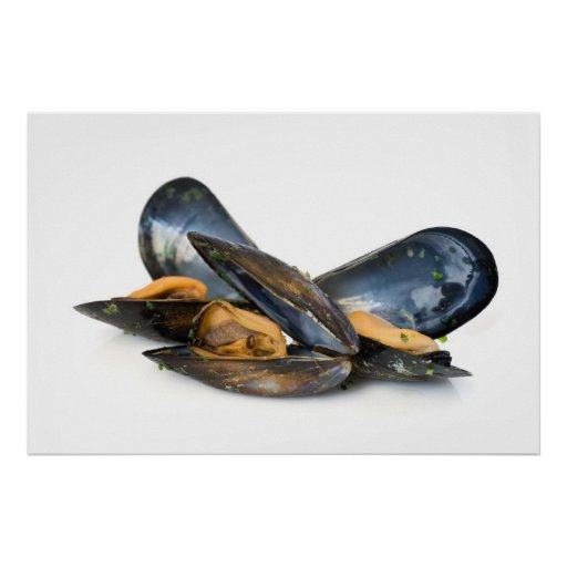 cooked mussels over white posters