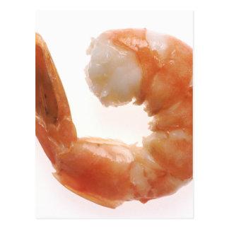 Cooked Shrimp Postcard