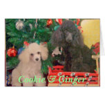 Cookie & Ginger Celebrate Christmas Greeting Card