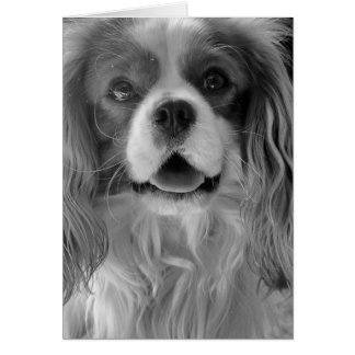 Cookie the King Charles Spaniel Greeting Card