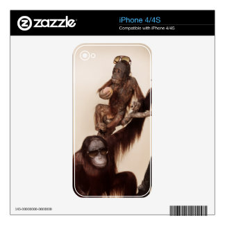 Cool animals in sunglasses. iPhone 4 decal