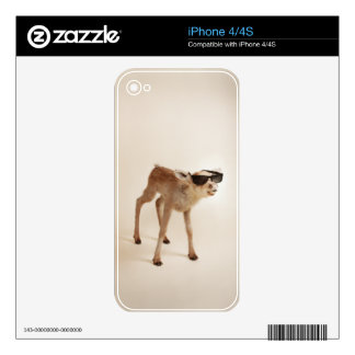 Cool animals in sunglasses. iPhone 4 skin