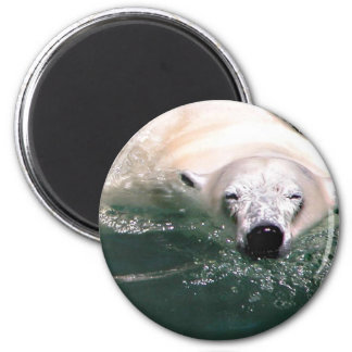 Cool bear 2 inch round magnet