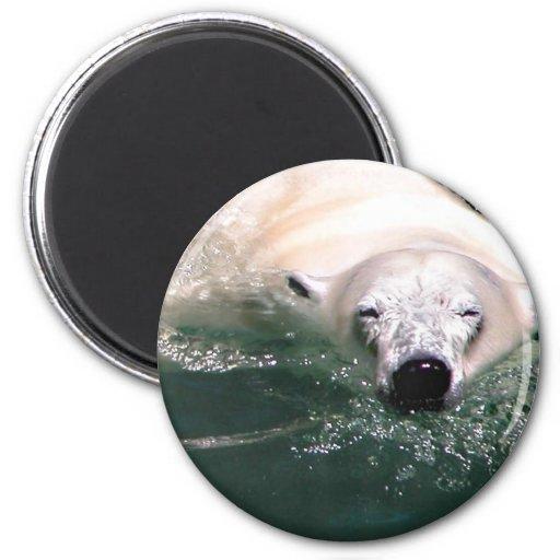 Cool bear fridge magnet