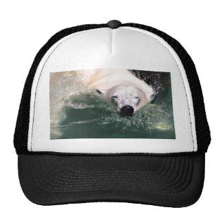 Cool bear hat