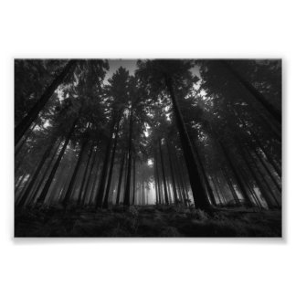 Cool Black and White Forest Fog Silence Gifts Photo Print