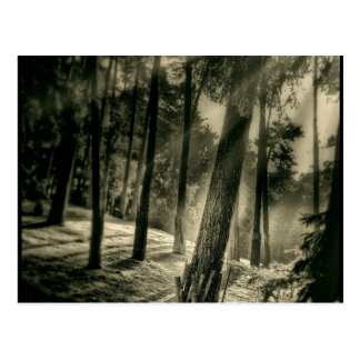 Cool Black and White Forest Sun Rays Nature Gifts Postcard