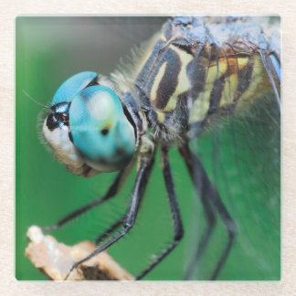 Cool Blue Dragonfly Iridescent Compound Eyes Glass Coaster