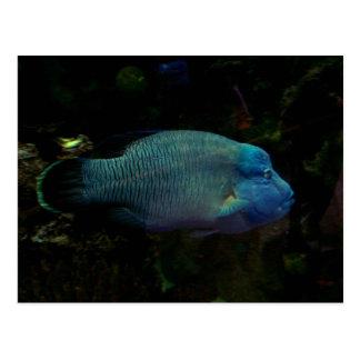 Cool Blue Fish Postcard