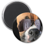Cool Boxer in sunglasses magnet