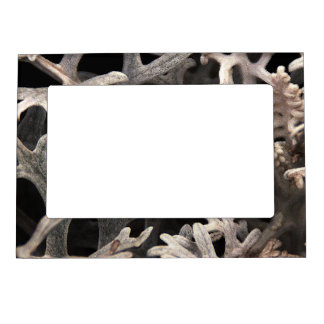 Cool Branching Plant Botanical Magnetic Picture Frame