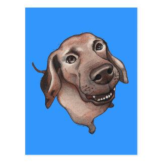 Cool brown dog postcard