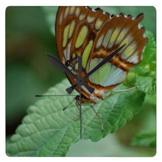 Cool Butterfly Wallclocks