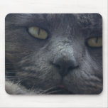 Cool Cat Face Mouse Pad