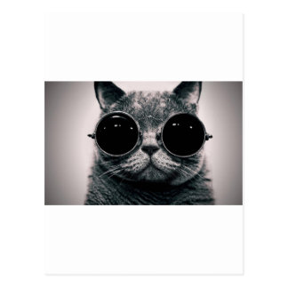 cool cat kool kat with shades postcards