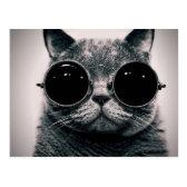 cool cat! postcard