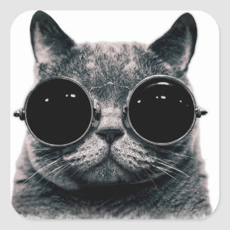 COOL CAT. SQUARE STICKER