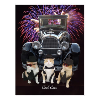 Cool Cats Postcard