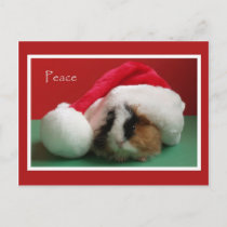 Cool Christmas Guinea Pig Post Card