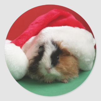 Cool Christmas Guinea Pig Stickers