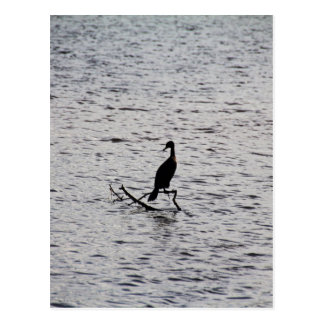 Cool Cormorant Postcard