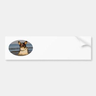 Cool Dog at the Beach Bumper Sticker