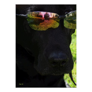 Cool Dog Poster