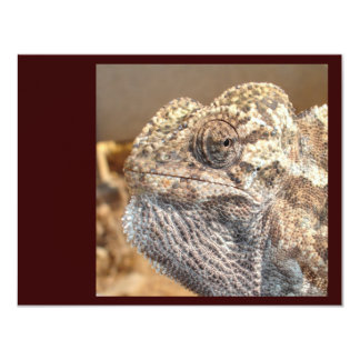 Cool Dude: Chameleon with Attitude Card